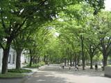 白川公園の新緑