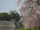 名古屋城としだれ桜