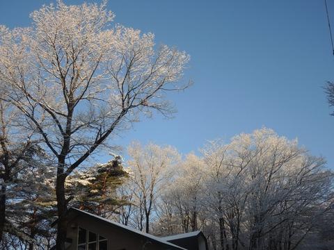 2019-1-17 SNOW