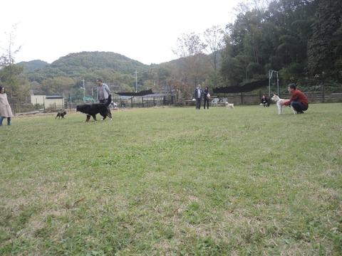 2019-11-4 dogrun02