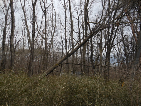 2018-3-12 TREE