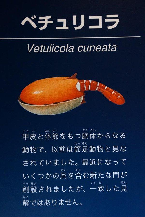 エビの寿司