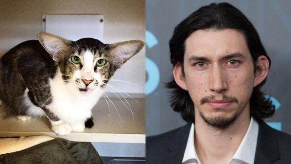 アダムドライバー似の猫