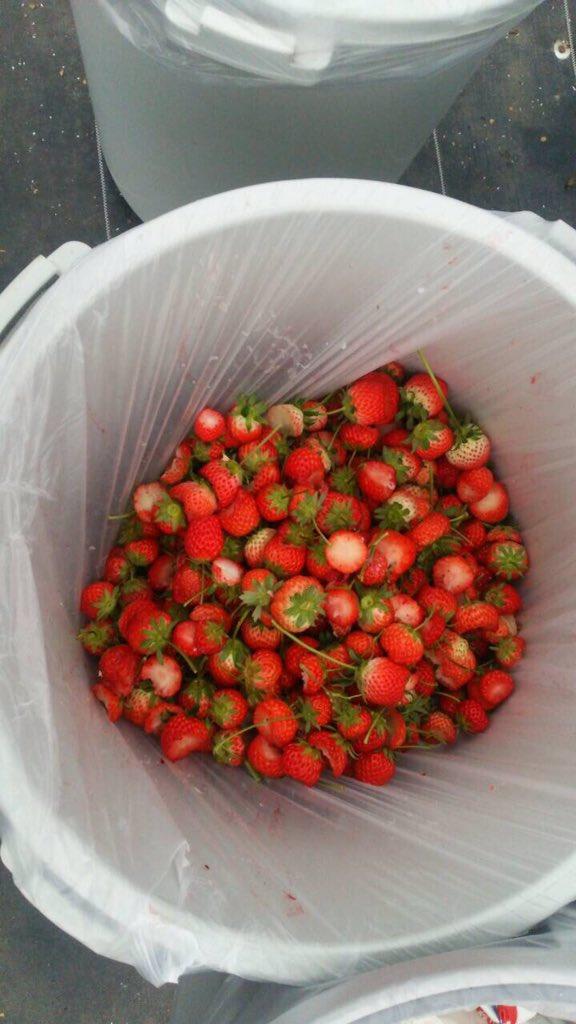 残されたイチゴ