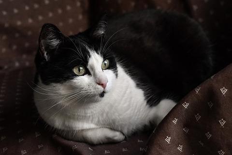cat-3549515_640
