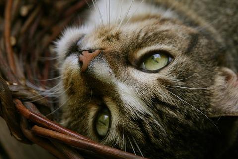 cat-3669391_640