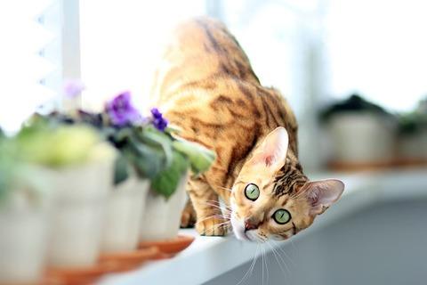 cat-877108_640