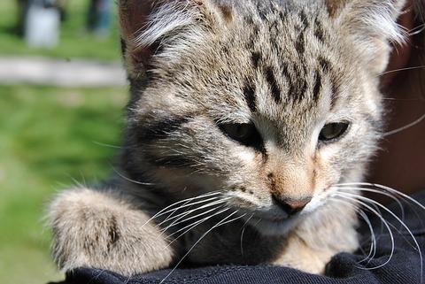 cat-1277289_640