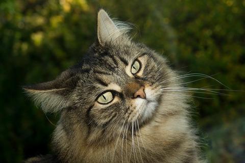 cat-2908707_640