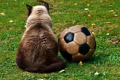 cat-2486447_640