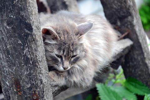 cat-3568383_640