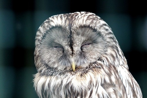 owl-2145698_640