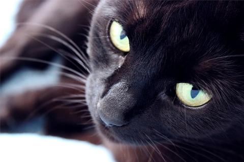 cat-428093_640 (1)