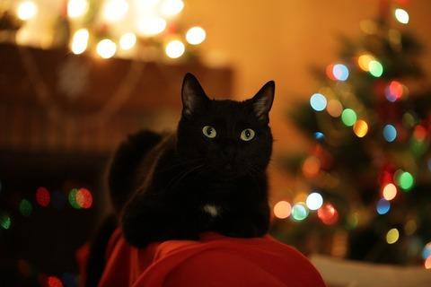 christmas-cat-3805080_640