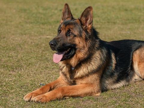 dog-2144031_640