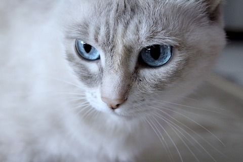 blue-eyes-2994641_640