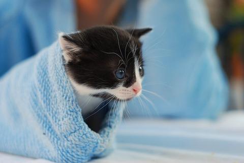 kitten-4019442_640