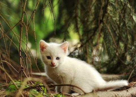 cat-1703440_640 (1)