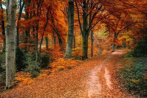 autumn-3842589_640