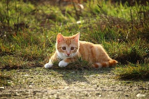 cat-1184891_640