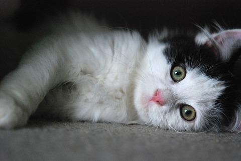 kitten-2525143_640