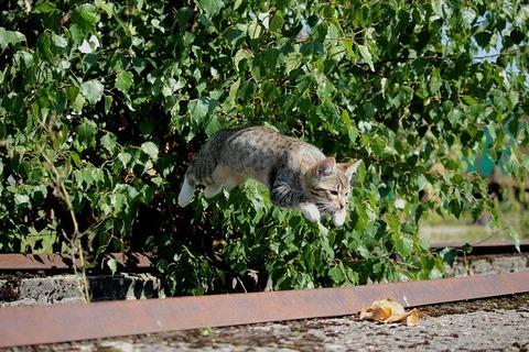 cat-913059_640