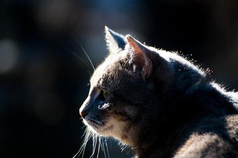 cat-4052373_640