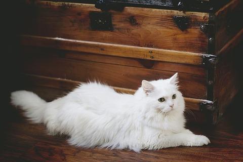 cat-2213352_640