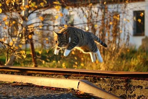 cat-1040753_640
