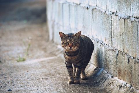cat-3794325_640