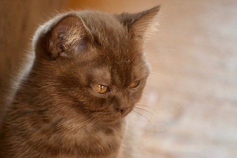 cat-5320941_640