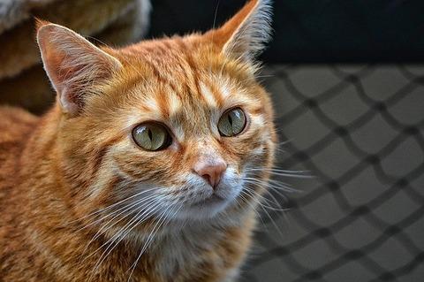 cat-3823333_640
