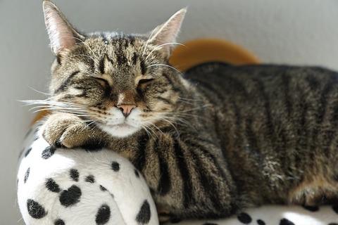 cat-2525341_640