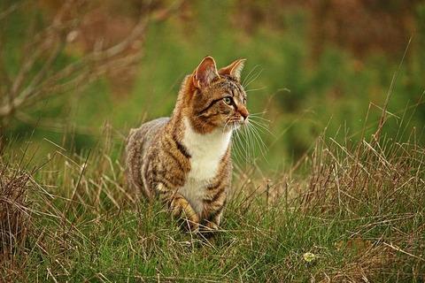 cat-2219446_640