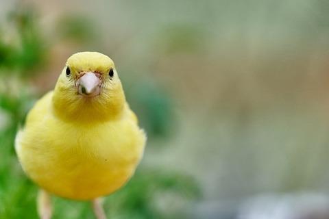 bird-3386323_640