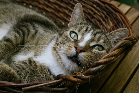 cat-3742050_640