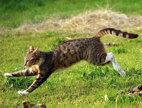 cat-1404147_640