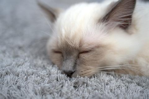 cat-3588643_640