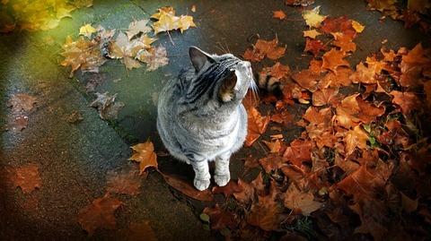 cat-756357_640