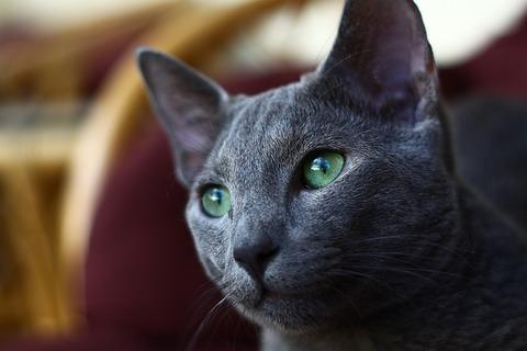cat-1910266_640