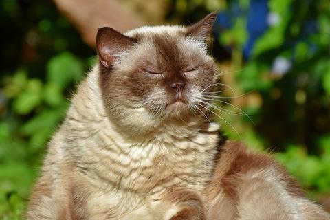 cat-3535203_640