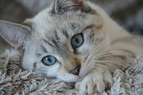 cat-2783601_640