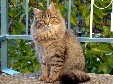 cat-3366121_640