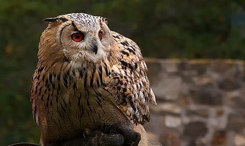 owl-4386509_640