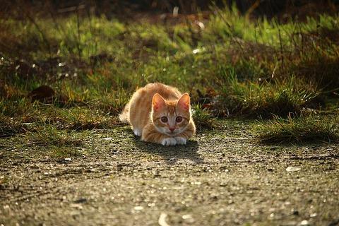 cat-1184743_640