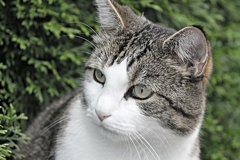 cat-3071997_640