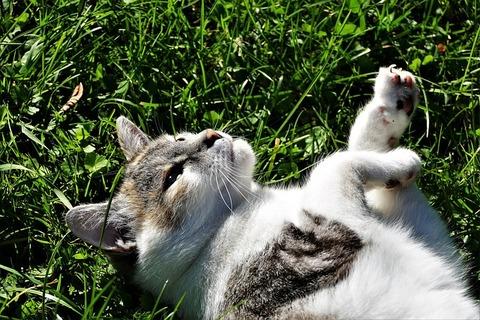 cat-3732117_640