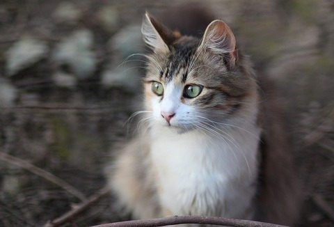 cat-3280535_640