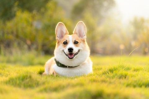 dog-4988985_640