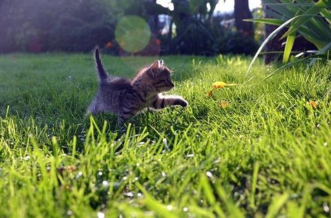 cat-727266_640
